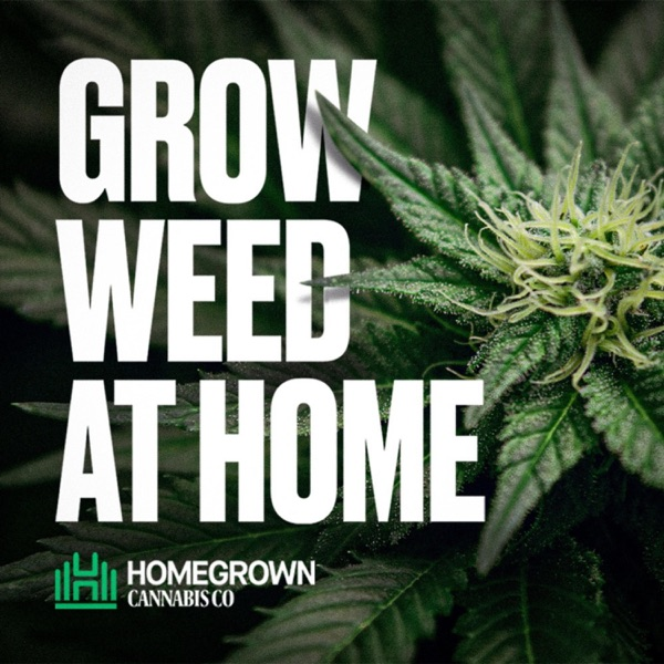 Grow Weed at Home with Homegrown Cannabis Co.