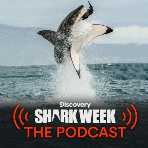 Shark Week's Daily Bite