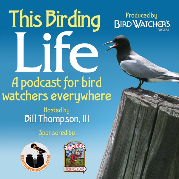 This Birding Life